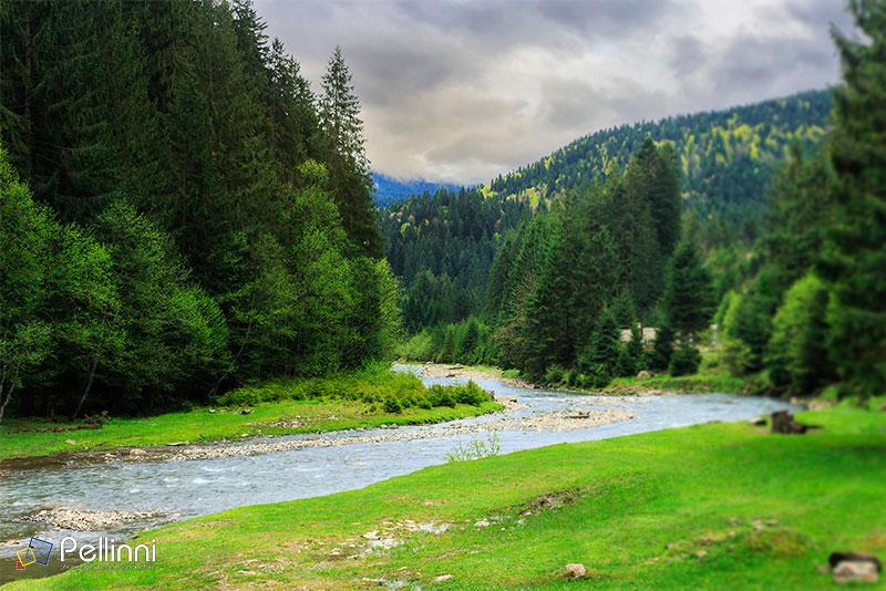 Misty Green Forest Nature River Beautiful 1ziw: Pellinni Photo And Design Portfolio